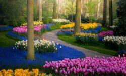 Từ vựng tiếng Anh về hoa